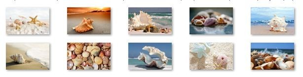 Sea Shells Windows 7 Theme with sound