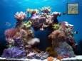 Beautiful Reef [AD]
