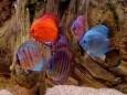 Aquarium Fishes Free Screensaver